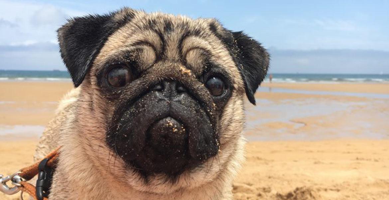 NB-apps cuidado mascotas